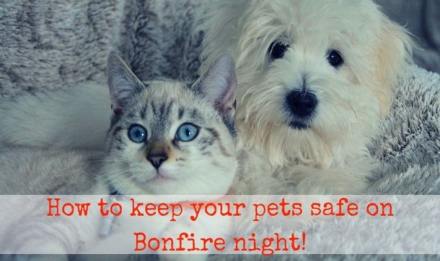 How To Keep Your Pets Safe On Bonfire Night!